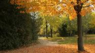 Leaves falling from a tree Stock Footage