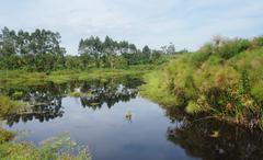 Waterside scenery near rwenzori mountains Stock Photos
