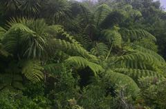 Greenery of New Zealand Stock Photos