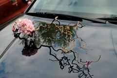 floristics. carnation and a sprig of hazel on the hood - stock photo