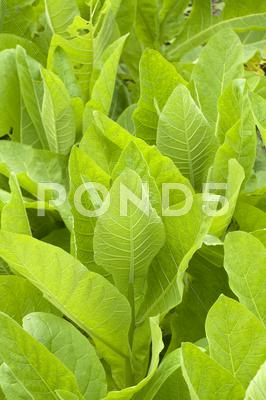 Stock photo of Lush leaves