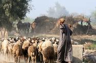 Herder in Egypt Stock Photos