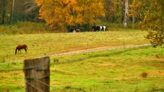 horses in an autumn pasture - stock footage