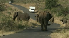 A herd of elephants walking across the road. Stock Footage