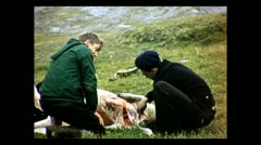 British Columbia skinning out sheep 1939 Stock Footage