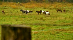 Horses in pasture cades cove tennessee Stock Footage