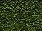 Natural mosaic green leaves background Stock Illustration