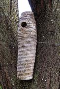 Stock Photo of sisal nesting log for woodpeckers