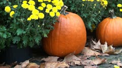 Pumpkins and autumn flowers Stock Footage