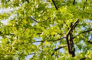 Green autumn leaves Stock Photos