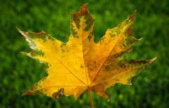 Leaf on grass Stock Photos