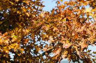 Red autumn leaves Stock Photos