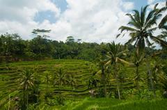 Rice terrace in bali Stock Photos
