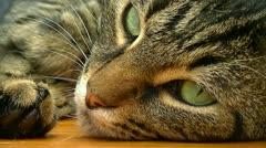 XCU of Cat flinching eye Stock Footage