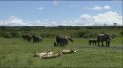Elephant Herd with Cheetah Coalition Stock Footage