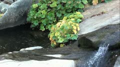 Mountain Creek with Fall Colors Stock Footage