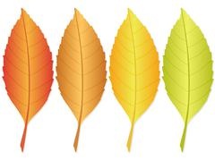 Autumn leaf Stock Illustration