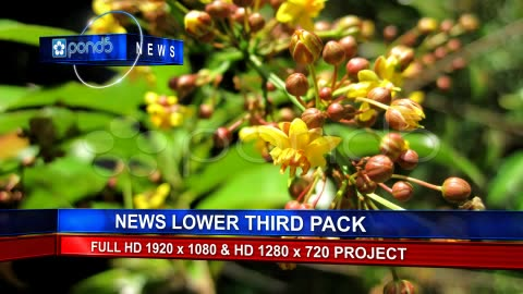 After Effects Project - Pond5 News Lower Third Pack 12385695