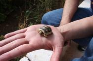 Baby tortoise Stock Photos