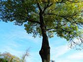 Canopy tree Stock Photos