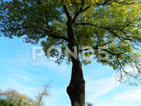 Stock photo of canopy tree