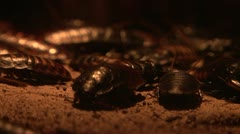 Cockroaches Stock Footage