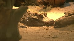 Crocodile blinking its eye Stock Footage