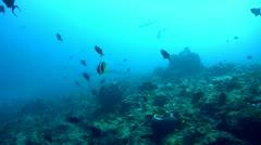 Whitetip reef shark (Triaenodon obesus) silouhette - stock footage