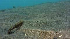 Estuary seahorse (Hippocampus kuda) moving with the waves Stock Footage