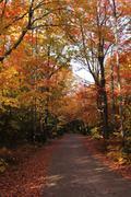 Narrow road in Killarney Provincial Park. - stock photo