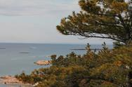 Pine tree with view of Georgian bay. Stock Photos