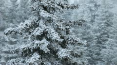 Stock Video Footage of Spruce with snow