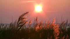 Reed on Sunset at the Baltic Sea Stock Footage