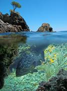 Island and Mediterranean dusky grouper Stock Photos