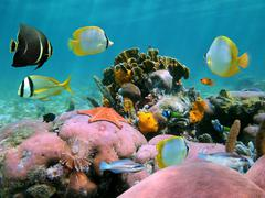 beautiful coral reef - stock photo