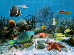 coral reef and starfish - stock photo