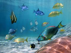 shoal of fish on a sandy seabed - stock photo