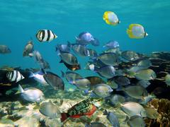 shoal of tropical fish in a coral reef - stock photo