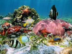 starfish and corals - stock photo