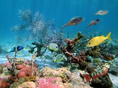 undersea wildlife - stock photo