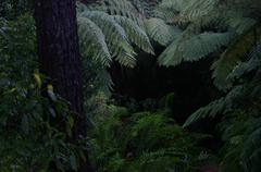 Path & Punga Ferns Stock Photos