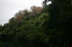 Pond and Punga Ferns - stock photo