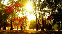 The autumn city park. Beautiful background Stock Footage