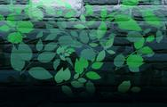 Nature wall painting Stock Illustration