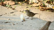 Sparrows Stock Footage