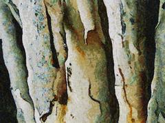 Abstract oil painting - white tree and bark Stock Illustration