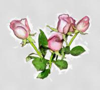 pink roses oil painting - stock illustration
