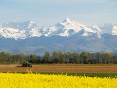 rape field and mountains - stock photo