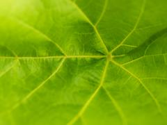 leaf macro - stock photo