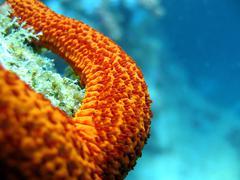 Close up image of red starfish arm underwater - stock photo
